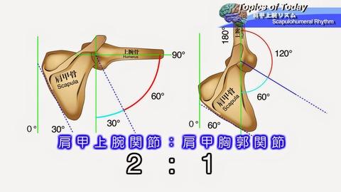 肩甲上腕リズム-3