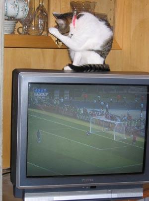 ワ−ルドカップ優勝