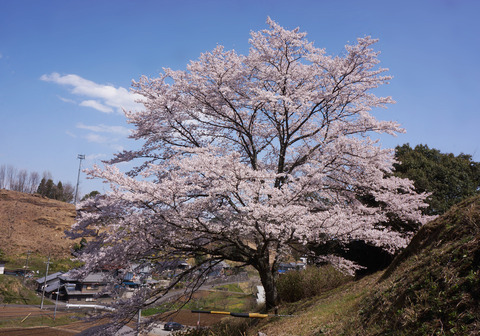 山の上の春1