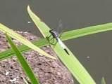 040816蜻蛉