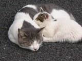 041111猫の親子