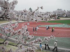 100407桜@武蔵野市体育館陸上競技場