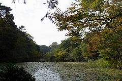 101107石神井公園三宝寺池