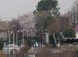 060327桜