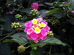 091110道端の花