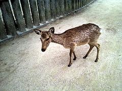 100416鹿