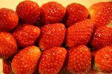 070314イチゴ