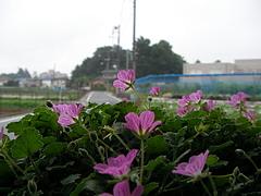 090531花