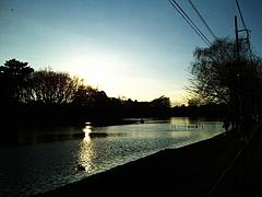 100113石神井公園ボート池