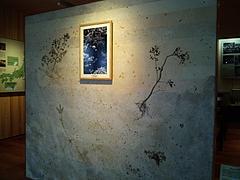 100801牧野記念庭園展示室内部