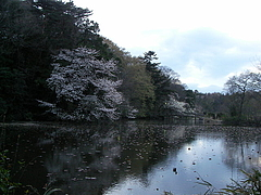 100401石神井公園三宝寺池