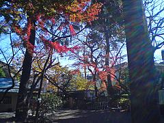 101209牧野記念庭園
