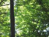 050830木漏れ日