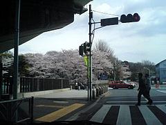 090405桜@参宮橋