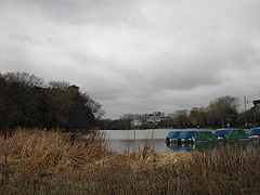 100212石神井公園ボート池