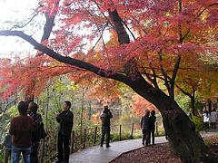 101128石神井公園三宝寺池