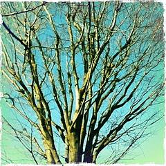 101222樹木