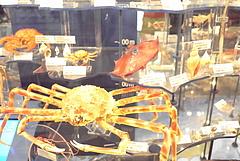 100813深海の生物@科学博物館