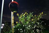 051020夜景2