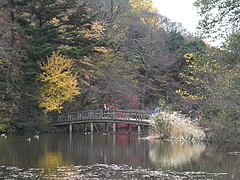 091129石神井公園三宝寺池