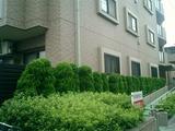 植栽の手入れ具合でマンション管理組合のレベルがわかります