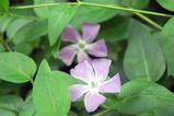 紫色・・・