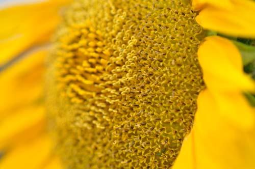 2009-07-18 035-g_500