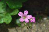 良く見る花・3