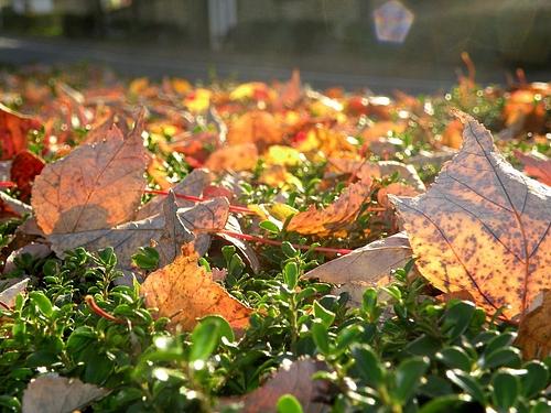 街路樹の上にも落ち葉・・・