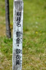 owari/asahi