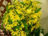 黄色は春の色・・・