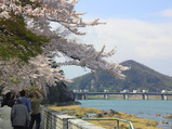 犬山城の桜・2