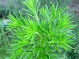 zannsho