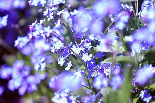 春色に染まって〜♪ 2