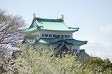 名古屋城の桜.3