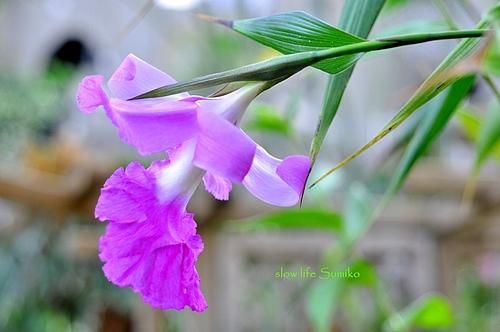 珍しい花? 2