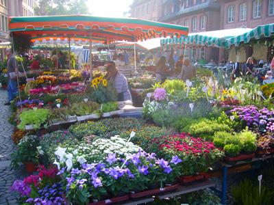 市場の秋の花2