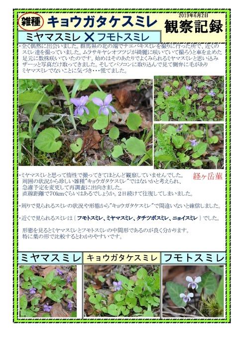 キョウガタケスミレ観察記録-1