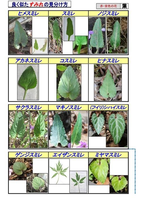 紫系のすみれ-page6
