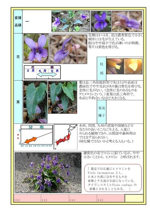 ヒメスミレ-page2