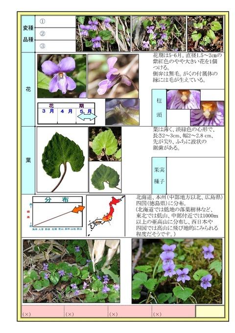 ミヤマスミレ-page2