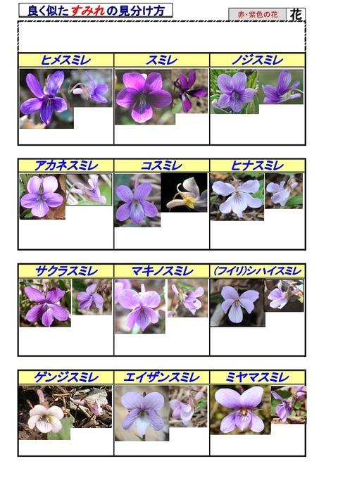 紫系のすみれ-page5