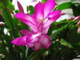 061114ピンクの花