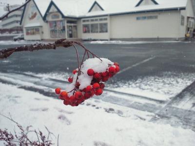 年末の雪はこんなもんじゃなかった