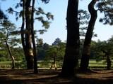 岡山後楽園 赤松のこも巻きと 岡山城 2008.10.28