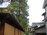 有隣荘の瓦と壁に、緑と橙が調和する 2008.5.1