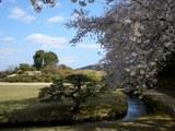 桜&唯心山 2007.4.5