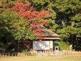 後楽園の紅葉風景