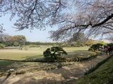 岡山後楽園の桜と唯心山(ゆいしんざん) 2009.4.7