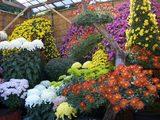 岡山後楽園の大菊花壇